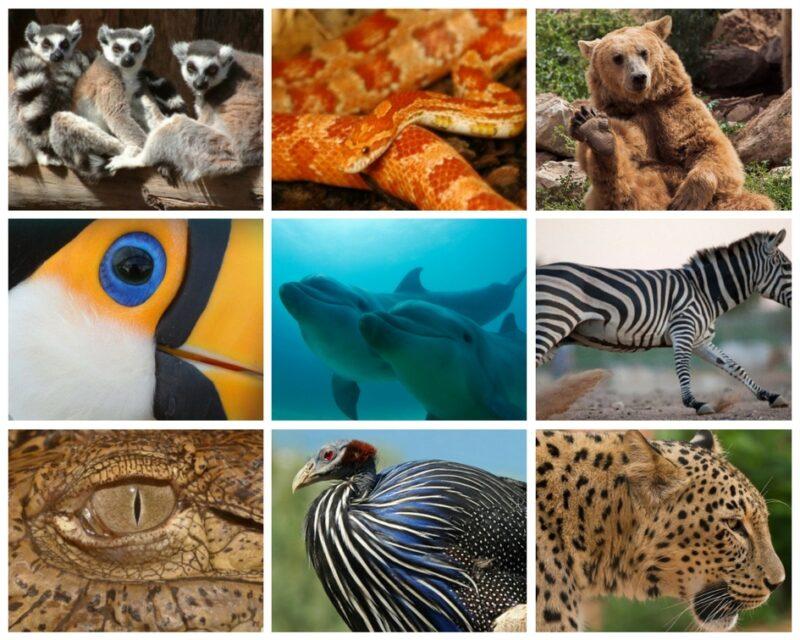 zoo-attika-park-animaux