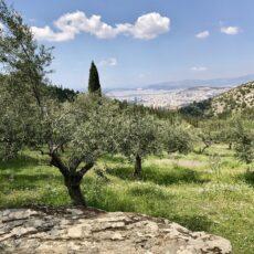 Visiter Athènes : La vue depuis la forêt de Kaisariani Kessariani