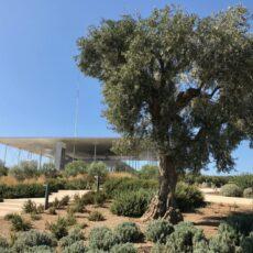 Le parc du centre Stavros Niarchos à Athènes