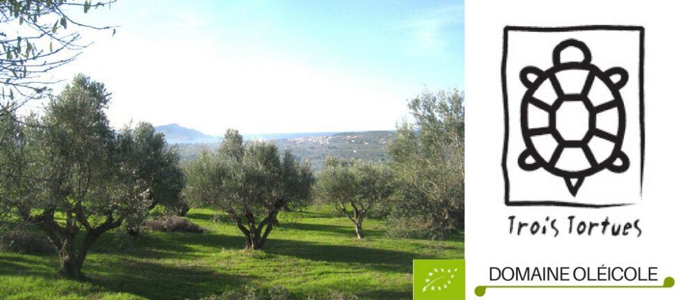 L'oliveraie Bio © Trois Tortues agrotourisme ecogite, , ecotourisme vacances nature