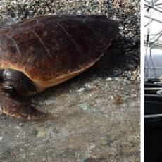 Enfants Athènes : le centre de protection des tortues de mer
