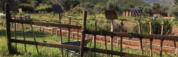 farmamoo jardins collectifs, potagers, ferme athènes nea makri