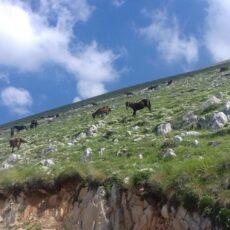 excursions sur le mont olympe aventures jeep randonnées