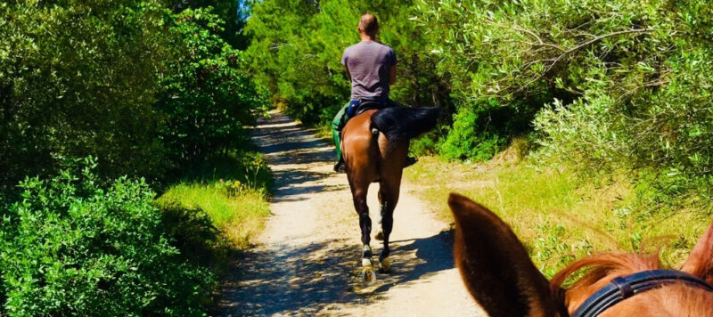 mont parnitha parnes athenes cheval
