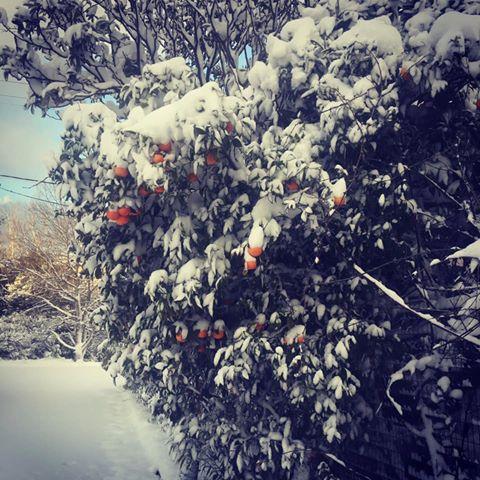 Destinations pour un hiver en Grèce
