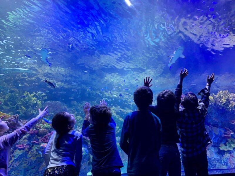 xplore athenes - activité enfants athènes