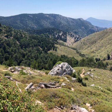 randonnée autour d'Athènes dans la forêt de Tatoi