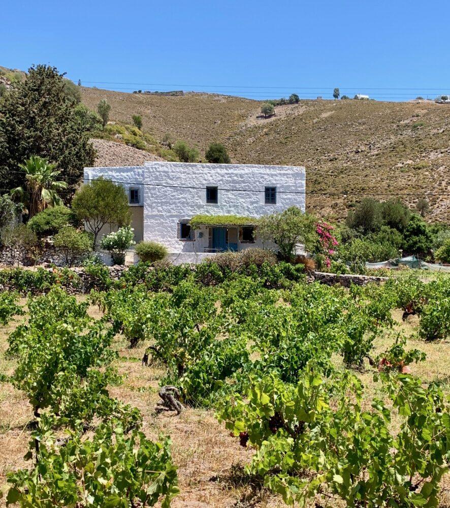 maison dans les vignes à Patmos charme iles grecques