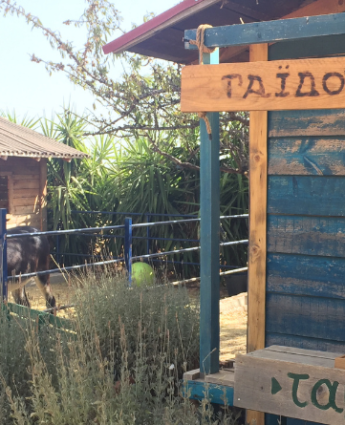 Donkeysland, un lieu dédié à l'âne